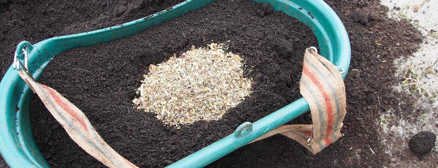 Eingesät wurde eine Sand-Magerrasenmischung mit vorwiegend regionalem Saatgut
