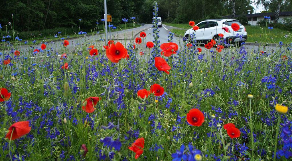 Mohnblumen an Straße