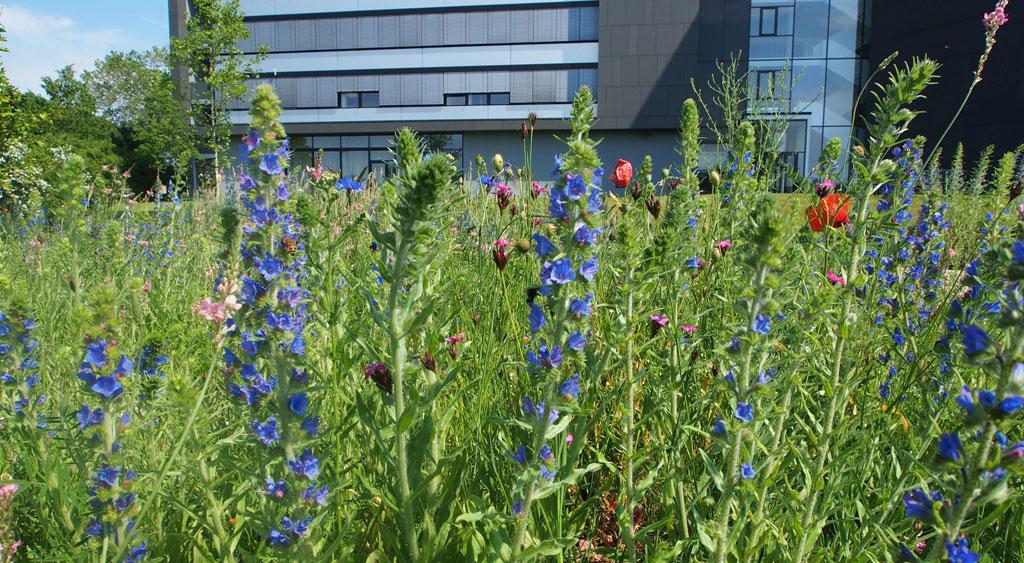 Blumenwiese vor Firmengelände