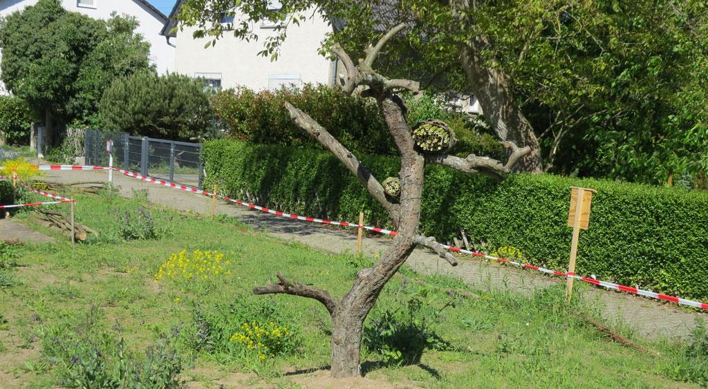 Baum auf Blumenwiese