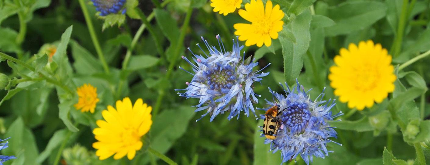 Blaue und gelbe Pflanzen
